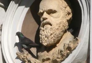darwin-evolution-schöpfung